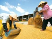 Tài chính - Bất động sản - ADB: Nông nghiệp sụt giảm kéo tăng trưởng kinh tế VN xuống 6%