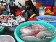Thị trường - Tiêu dùng - Còn nhiều loại cá nhiễm chất cấm