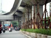 Tin tức trong ngày - Vì sao Hà Nội trồng cây xanh dưới gầm đường sắt?
