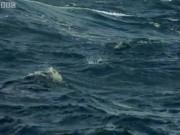 """Thế giới - Né kẻ thù dưới nước, cá bay gặp """"yêu quái"""" trên không"""