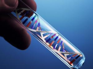 Bi hài đằng sau phòng xét nghiệm ADN