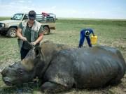 Trại tê giác lớn nhất thế giới vô tư bán sừng lấy tiền