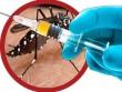 Đã có vắc-xin phòng sốt xuất huyết, người dân nên làm gì?