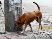 Đã có 56 người tử vong do chó dại cắn