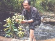 Tin tức trong ngày - Đi tìm cây thuốc trong rừng đại ngàn