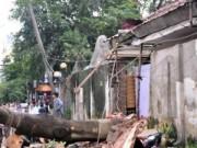 Tin tức trong ngày - TP.HCM: Mưa lốc, cây bật gốc khiến nhiều người suýt chết