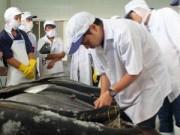 Thị trường - Tiêu dùng - Cá ngừ câu theo kiểu Nhật, ngư dân kêu lỗ