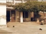"""Video An ninh - Trở thành sát thủ vì… """"chữ hiếu"""" (Phần 1)"""