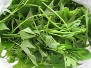 Sức khỏe đời sống - Tác dụng chữa bệnh của rau khoai lang