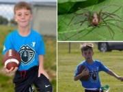 Thể thao - Xót xa bé 10 tuổi chết vì nhện cắn khi chơi rugby