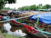 Thị trường - Tiêu dùng - Nhà máy mía đường duy nhất ở Cà Mau ngừng thu mua mía