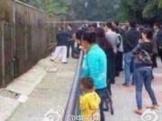 Tin tức trong ngày - TQ: Vào vườn thú, bé trai bị gấu cắn đứt lìa cánh tay