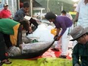 Thị trường - Tiêu dùng - Vì sao cá ngừ Việt Nam khó đi Mỹ?