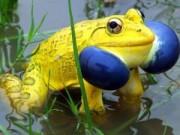 """Phi thường - kỳ quặc - 20 loài vật có màu sắc rực rỡ, """"độc"""" nhất thế giới"""