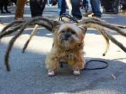 Phi thường - kỳ quặc - Cún cưng nô nức tham gia lễ hội Halloween