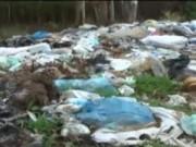 Video An ninh - Đồng Nai: Buộc 185 cơ sở gây ô nhiễm phải di dời
