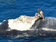 Phi thường - kỳ quặc - Nghịch dại cưỡi xác cá voi trêu đùa cá mập