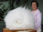 """Chuyện lạ - 20 động vật có """"mái tóc"""" dài hiếm thấy"""