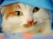 Chuyện lạ - Những chú mèo với bộ ria mép hóm hỉnh