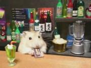 Phi thường - kỳ quặc - Chú chuột Hamster làm bồi bàn quán bar siêu đáng yêu