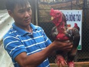 Bạn trẻ - Cuộc sống - Chàng trai 8x thu nhập trăm triệu nhờ gà Đông Tảo
