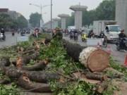 Tin tức trong ngày - Chuyên gia Nhật: Chặt cây là cái giá quá lớn để phát triển
