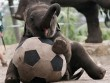 Tuyển tập tranh vui bóng đá 2014 (1)