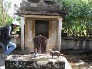 Tin tức trong ngày - Phát hiện dấu tích văn hóa Champa, linh vật lạ tại Huế