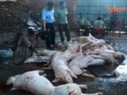 Thị trường - Tiêu dùng - Rợn người nửa tấn thịt heo thối suýt lên bàn nhậu