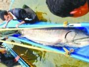 Tin tức trong ngày - TQ: Bắt được cá tầm khổng lồ dài 3,3 mét trên sông