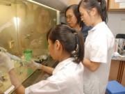 Giáo dục - du học - Chặt chẽ kiểm định chất lượng ĐH