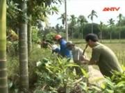 Video An ninh - Bùng phát rắn lục đuôi đỏ: Tội do thời tiết