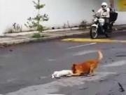 Thế giới - Xúc động cảnh chú chó kéo bạn bị xe đâm vào lề đường