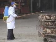 Sức khỏe đời sống - Cúm H5N1 chết người có nguy cơ bùng phát vào mùa đông