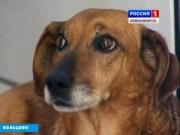 Phi thường - kỳ quặc - 5 chú chó phiên bản Hachiko khiến hàng triệu trái tim lay động