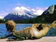 Phi thường - kỳ quặc - Kỳ bí những xác ướp nàng tiên cá