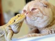 Phi thường - kỳ quặc - Tình bạn đặc biệt giữa những động vật khác loài