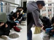Bạn trẻ - Cuộc sống - TQ: Tranh cãi vụ phạt học trò ăn 50kg hạt hướng dương