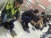 Giáo dục - du học - TQ: Sinh viên bị phạt ăn... nửa tạ hướng dương