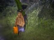 Tin tức trong ngày - Không tin bác sỹ, bố ôm con nhiễm Ebola trốn vào rừng