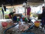 Thị trường - Tiêu dùng - Đồng Nai: Phát hiện cơ sở sản xuất thịt gà thối