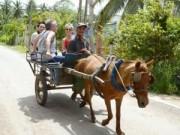 Du lịch - Về thăm vương quốc dừa xanh