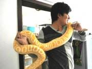 Phi thường - kỳ quặc - 10 năm sống chung với 25 con rắn khổng lồ
