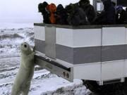 Chuyện lạ - Khách sạn di động giữa vòng vây gấu Bắc cực