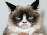"""Phi thường - kỳ quặc - Chú mèo có thu nhập """"khổng lồ"""" 2 nghìn tỷ đồng"""