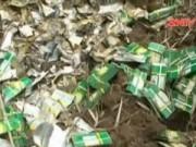 Video An ninh - Vụ chôn hàng trăm tấn thuốc trừ sâu: Không khởi tố vụ án
