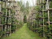 Phi thường - kỳ quặc - Ngỡ ngàng với nhà thờ tuyệt đẹp bằng…cây xanh