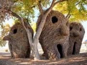 Du lịch - Kỳ quái những tác phẩm điêu khắc được bện từ cây