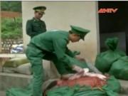 Video An ninh - Chặn gần 500kg vịt đông lạnh TQ vào Việt Nam