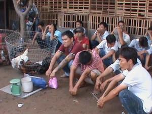 An ninh Xã hội - Phá trường gà lớn quy tụ người nghiện ở Sài Gòn